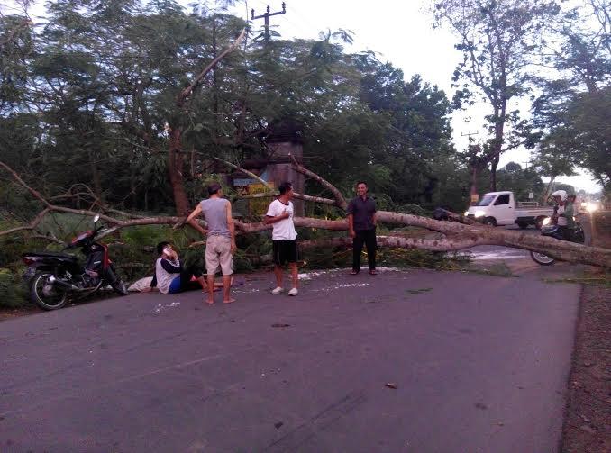 Pohon tumbang di Jalan Raya Kota Metro tepatnya di depan makan cina atau samping gudang PLN, membuat seorang pengendara Ahmad, pedagang ampas santan kelapa di Pasar24, Tejo Agung, kecelakaan | Parman/jejamo.com