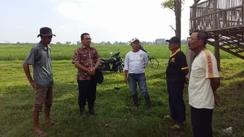 Sikapi Serbuan Wereng, Dinas Pertanian Metro Konsolidasikan Kelompok Petani