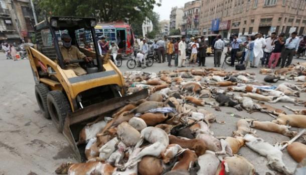 Pemerintah Pakistan Sengaja Racuni Ratusan Anjing Liar di Kota Karachi