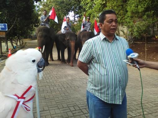 Gajah dan Kakatua Ikut Upacara HUT Ke-71 RI di Lembah Hijau