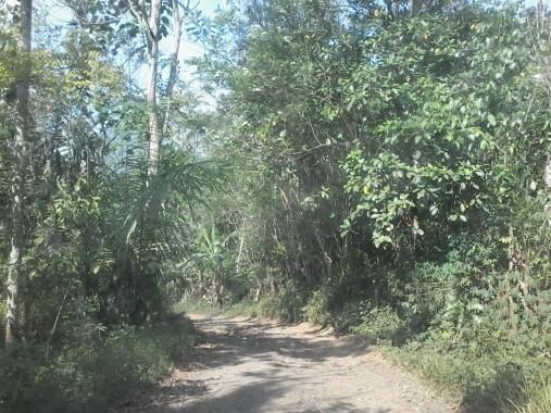 Jalan sepanjang 7 kilometer yang menghubungkan Desa Kemala Raja dan Desa Tanjung Riyang, Kecamatan Tanjung Raja, Lampung Utara. | Buhairi Aidi/Jejamo.com