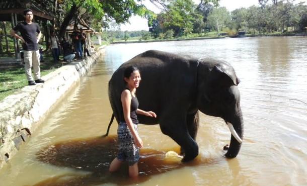 Jurnalis Mandikan Gajah