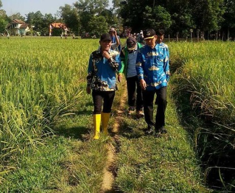 Pengendalian Hama Wereng, Kadis Pertanian Lamtim Kunjungi Penyemprotan Massal