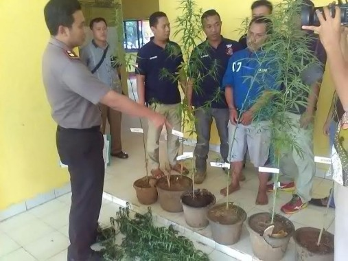 Tanam Ganja di Belakang Rumah, Erwin Warga Natar Lampung Selatan Dibekuk Polisi