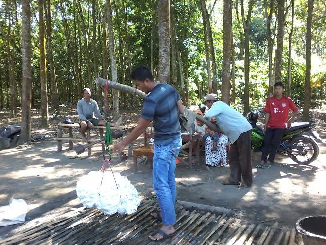 Para Buruh Kebun Karet di Tulang Bawang Barat Makin Terpuruk
