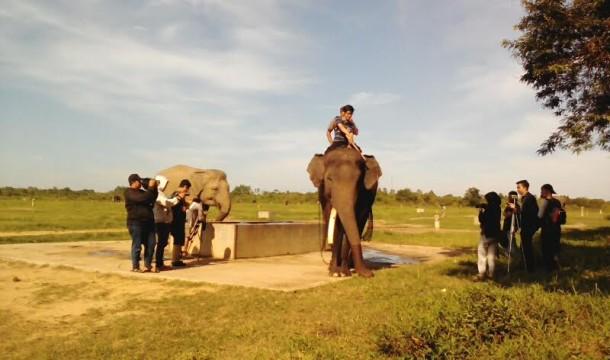 Ini Kabar Gembira Buat Gajah di Way Kambas Lampung Timur