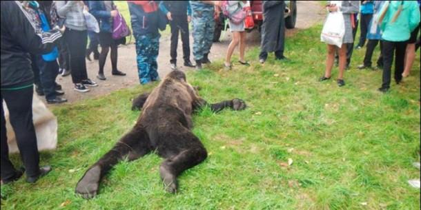 beruang-coklat-ditembak-mati