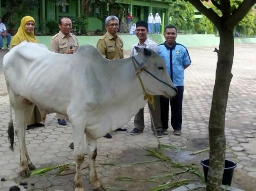 Yaslam dan FKAR Bandar Lampung Sembelih Hewan Kurban di 3 Sekolah