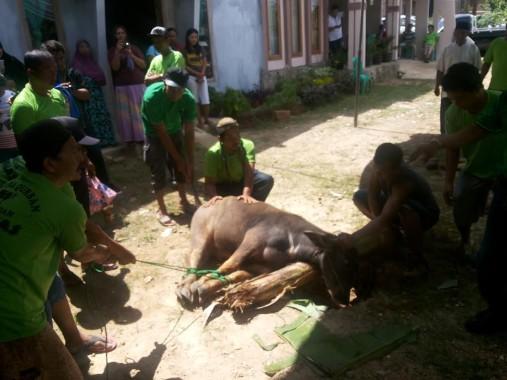 Majelis Taklim Al Ikhlas Tanjungseneng menyembelih dua ekor kerbau pada Idul Adha, Senin, 12/9/2016. | Sugiono/Jejamo,com