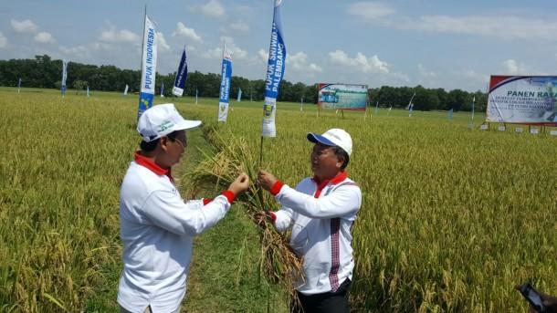 PT Pusri Palembang Panen Raya di Metro Timur, Kenalkan 3 Produk Baru