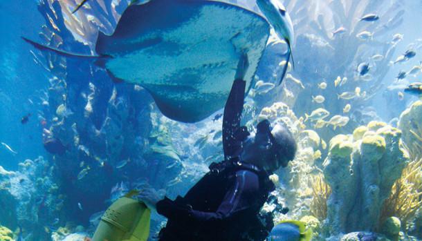 Penyelam Akuarium Raksasa Tewas Disengat Ekor Ikan Pari