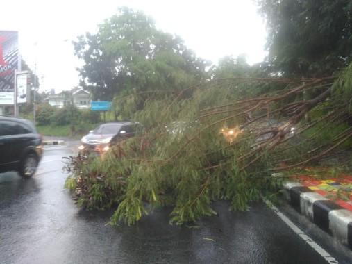 Breaking News: Pohon Tumbang Tutup Sebagian Jalan Diponegoro Bandar Lampung