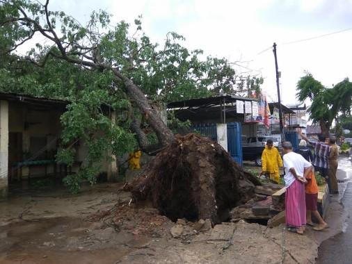Hujan Angin, Pohon Tua Tumbang Timpa Rumah di Metro Pusat