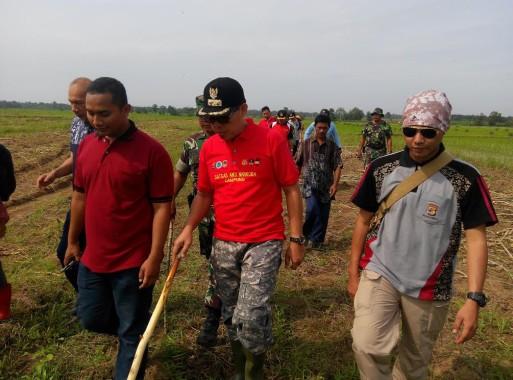Terkait Harga Singkong, Wakil Bupati Lampung Timur Minta Petani Bentuk Asosiasi