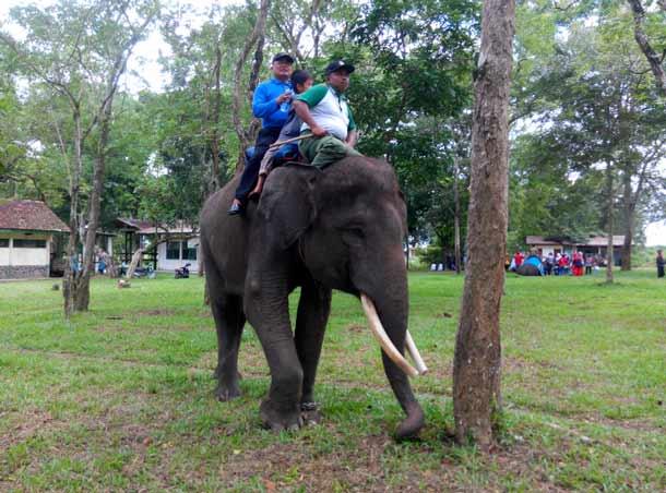 Advertorial: Dua Menteri Hadiri Pembukaan Festival Way Kambas Lampung Timur