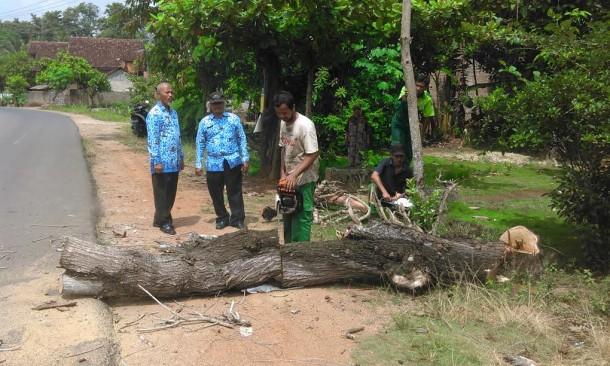 50 Persen Pohon di Jalan Protokol Kota Metro Rawan Tumbang, Distakopar Lakukan Pemangkasan