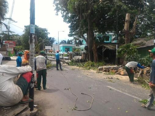 Antisipasi Pohon Tumbang, Pohon di Sekitar Jalan Tulang Bawang Enggal Ditebang