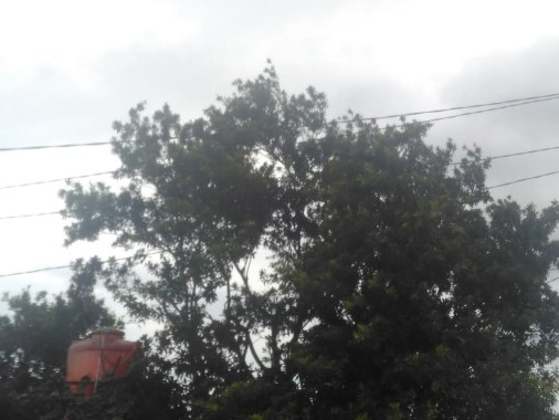 Tiga Hari Ke Depan Lampung Dilanda Angin Kencang