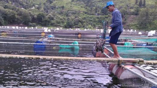 Guru di Lampung Utara Ini Siap Bantu Antisipasi Kematian Ikan, Tapi....