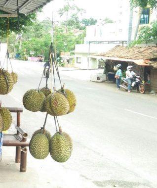 Pedagang Durian Musiman Jemput Rezeki di Sukadanaham Bandar Lampung