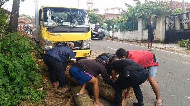 Akibat Angin Kencang, Pohon Jati Tumbang Timpa Truk di Jalan Sam Ratulangi Bandar Lampung
