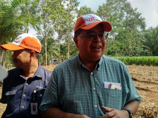 Panen Raya Bersama Petani Kemitraan, Ini Alasan PT Austasia Stockfeed Jabung Kembangkan Rumput Odot