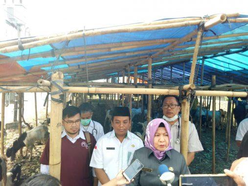 Dinas Pertanian Bandar Lampung Sidak Kesehatan Hewan Qurban