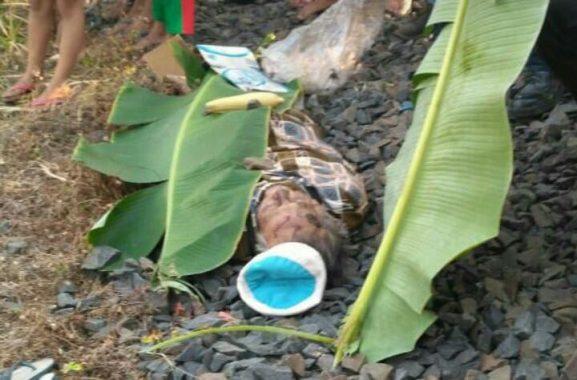 Tersambar Babaranjang di Rel Jagabaya, Seorang Pria Tewas