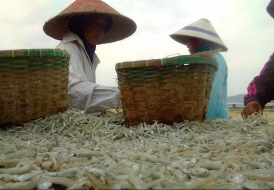 Cuaca Buruk, Pengusaha Ikan Asin Pulau Pasaran Kurangi Pekerja