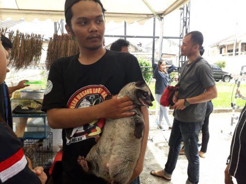 Kenalan dengan Komunitas Pecinta Musang Lampung Yuk