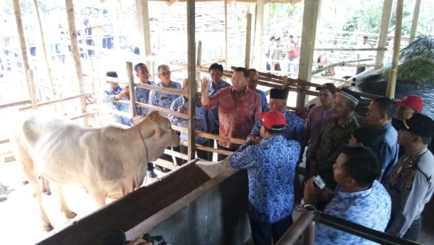 Sudin Serahkan Puluhan Alat Mesin Pertanian Indukan Sapi di Lampung Selatan