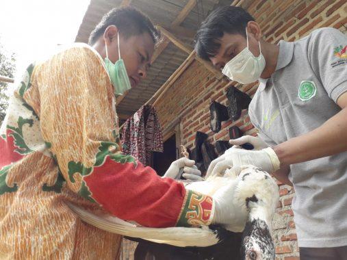 Seratusan Ayam, Bebek, dan Kucing Warga Campang Jaya Divaksin Massal Dinas Pertanian Bandar Lampung