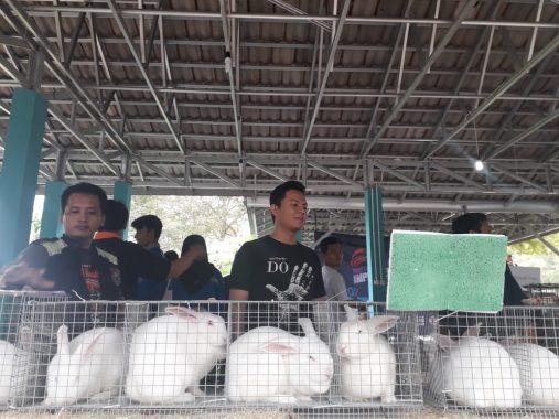 Komunitas Lampung Rabbit Breeders Gelar Kontes Kelinci Pertama di Sumatera