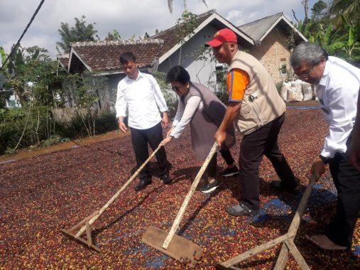 Mukhlis Basri Setuju Pabrik Kopi Dibangun di Lampung Barat, Apa Alasannya?