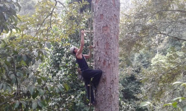 Rudi Hartono Pencari Madu Murni dari Pekon Batu Kramat Kotaagung Timur Tanggamus