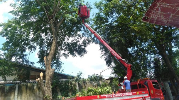 Petugas BPBD Bandar Lampung Tebang Dahan Beringin 15 Meter