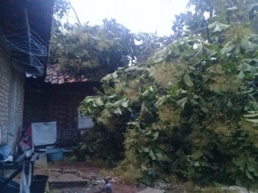 Pohon Tumbang Timpa Rumah di Dusun Kaliasin Desa Kalisari Natar