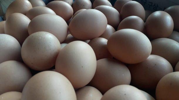 Esai Juwendra Asdiansyah: Pak Camat dan Sekilo Telur
