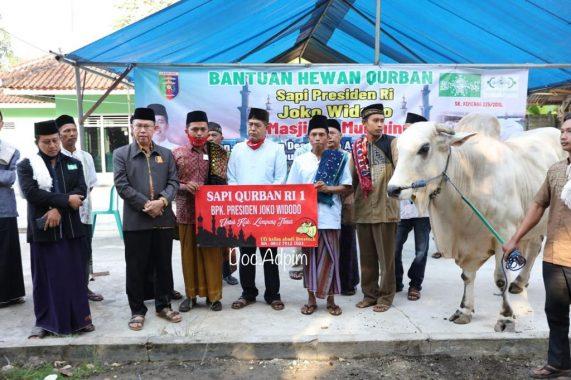 Gubernur Arinal Serahkan Sapi Kurban dari Presiden Joko Widodo kepada Jemaah Masjid Al-Mu'Minun Way Jepara