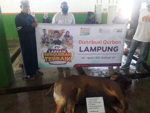 Polres Tanggamus Bagikan 350 Paket Daging Kurban