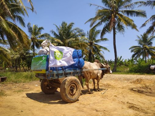 Relawan IZI Tempuh Rute Berat Salurkan Kurban ke Pekon Way Haru Pesisir Barat, Gerobak Sapi Dikerahkan Angkut Bantuan