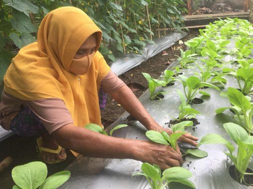 Di Kota Agung Tanggamus Warga Bisa Tukar Sampah dengan Sayuran
