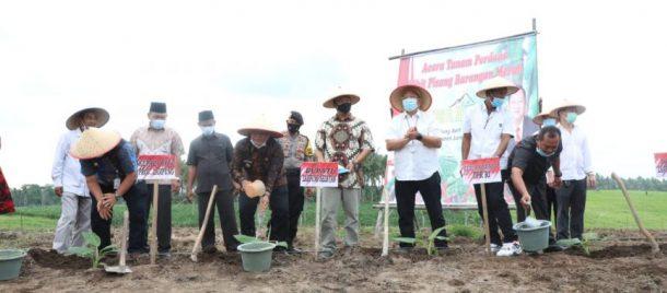 Nanang Ermanto Tanam Perdana Pisang Barangan Merah, Berharap Jadi Komoditas Unggulan di Lampung Selatan