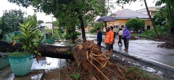 Hujan Disertai Angin Kencang Tumbangkan Pohon dan Tiang Listrik di Metro