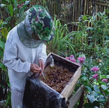 Nilai Jual Tinggi dan Panen Cepat Jadi Alasan Warga Tanggamus Budi Daya Lebah Klanceng