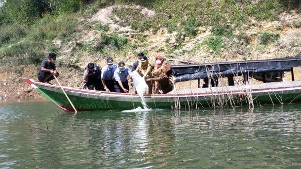 Bupati Tanggamus Gelar Bude Sar'i di Kecamatan Air Naningan, Tebar 100 Ribu Benih Ikan di Batutegi