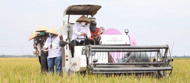 Nanang Ermanto Panen Bersama Demplot Padi VUB Inpari 32 di Sragi